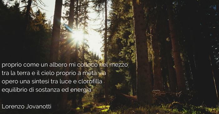 treedom_jovanotti 2