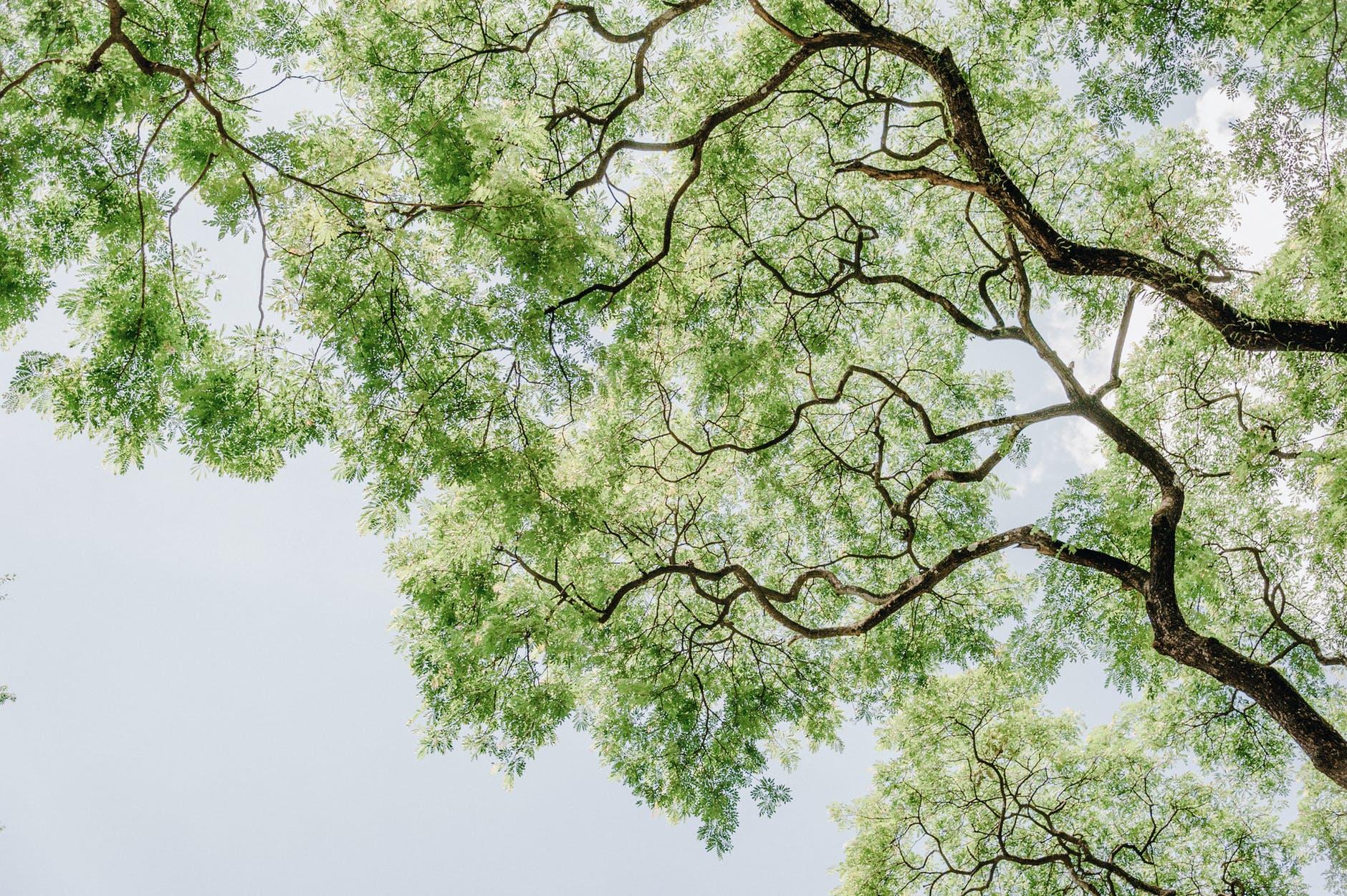 Mellin alberi Milano