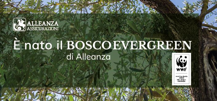 Bosco Evergreen Alleanza Assicurazioni